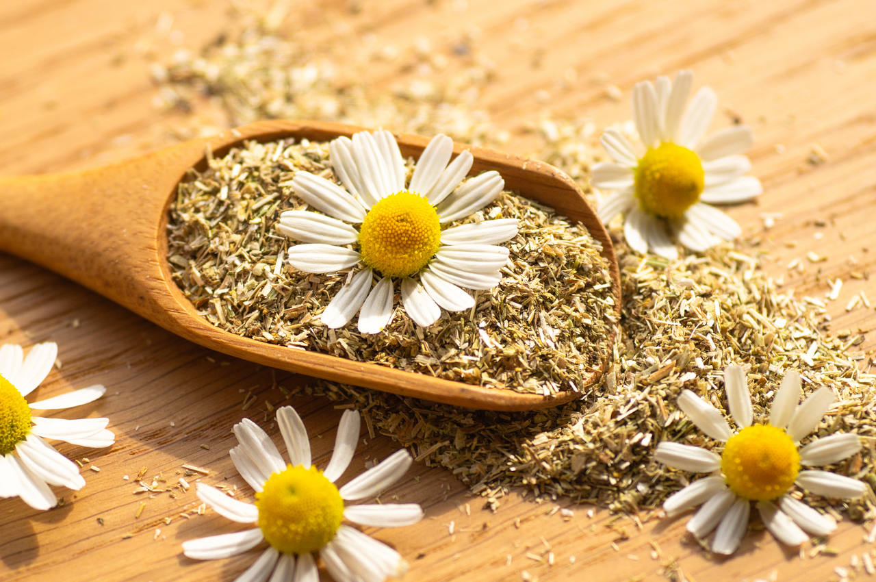 chamomile for hair is a great natural cure for your scalp