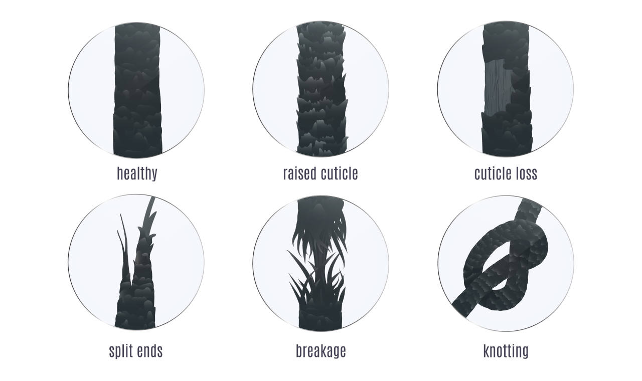 graphic showing the different types of hair problems