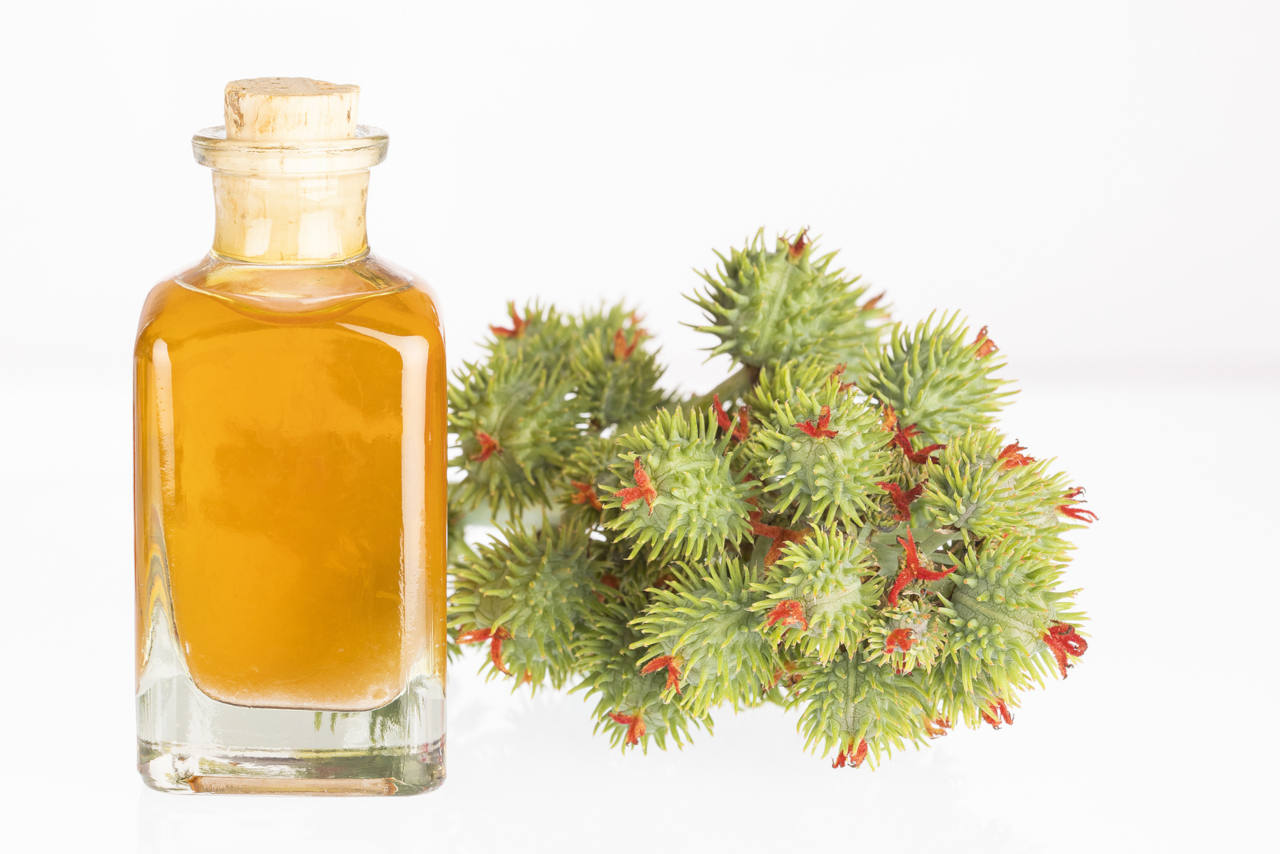 castor oil has many benefits for the hair